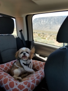 Sully in the truck - heading up to our very 1st stop June 9, 2018