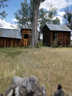 shed and chickencoop